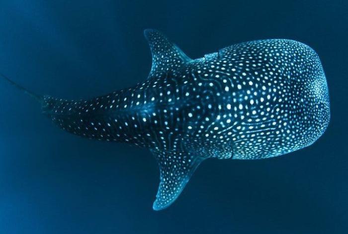 L'isola degli squali balena: connettersi all'amore incondizionato