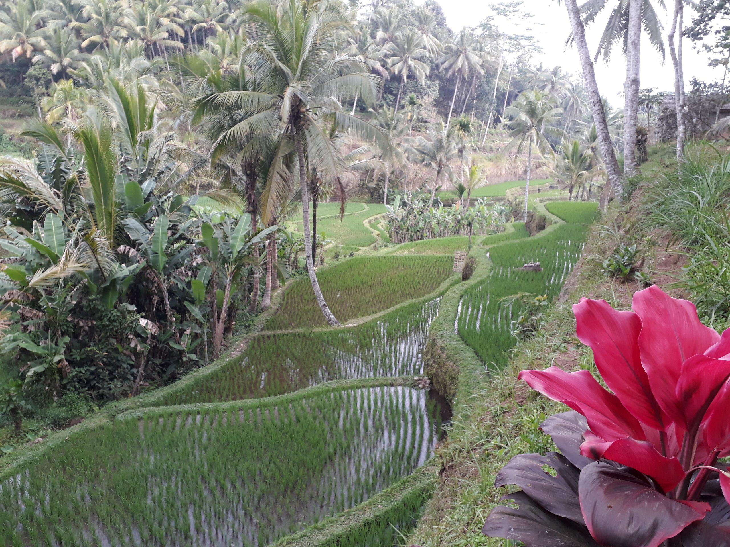 Viaggio a Bali: Una Profonda Esperienza di Evoluzione Interiore