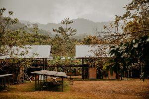 quarantena nella giungla